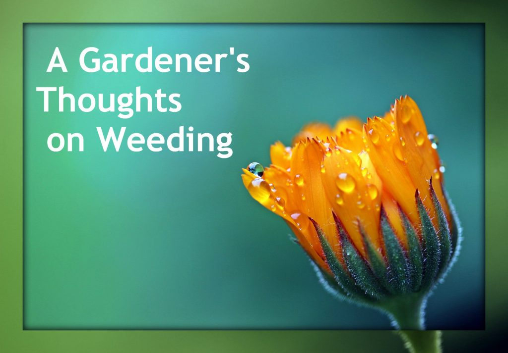A Gardener's Thoughts on Weeding
