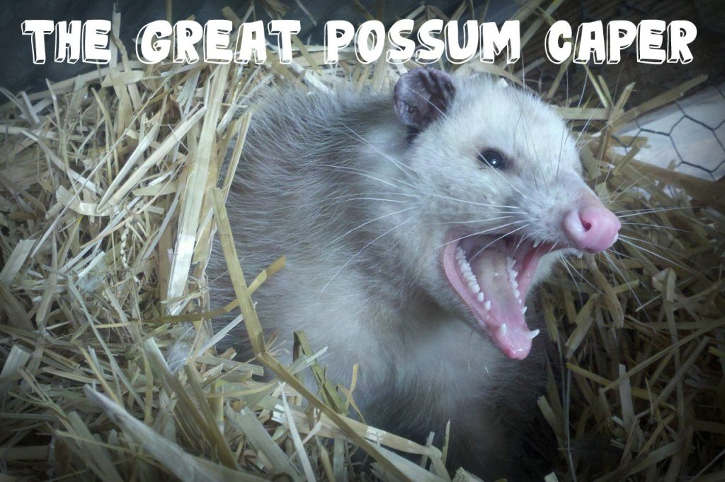 The Great Possum Caper