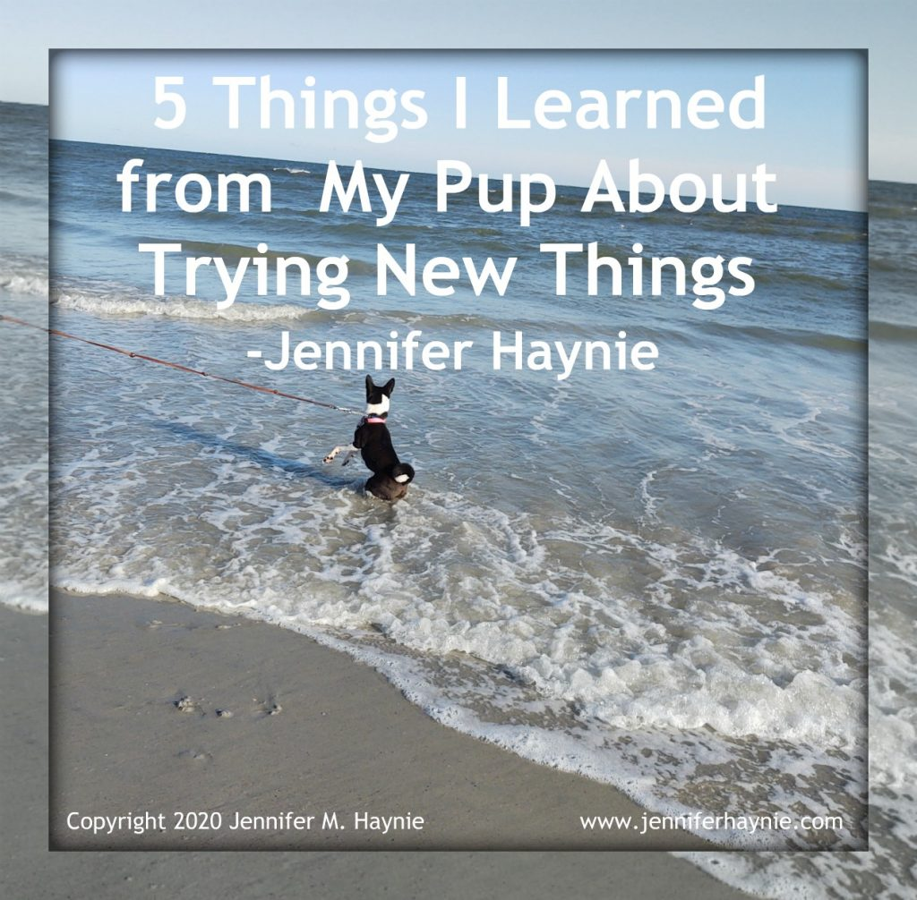 5 Things I Learned from my Pup about Trying New Things